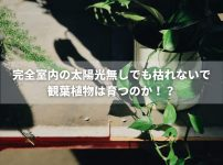完全室内の太陽光無しでも枯れないで観賞植物は育つのか!?